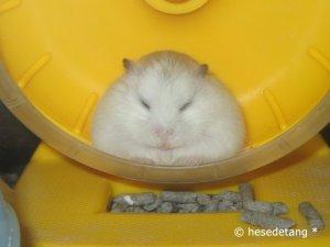 Snoozing Sashimi